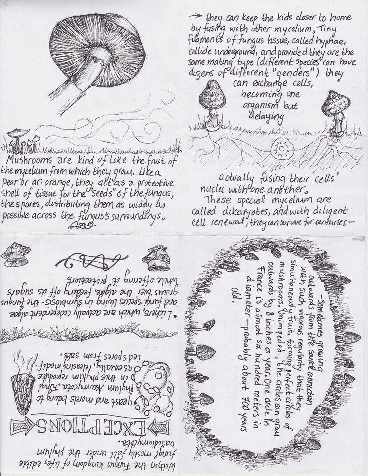 Mushroom Primer, 2013, pen & ink. A 12-page zine/booklet