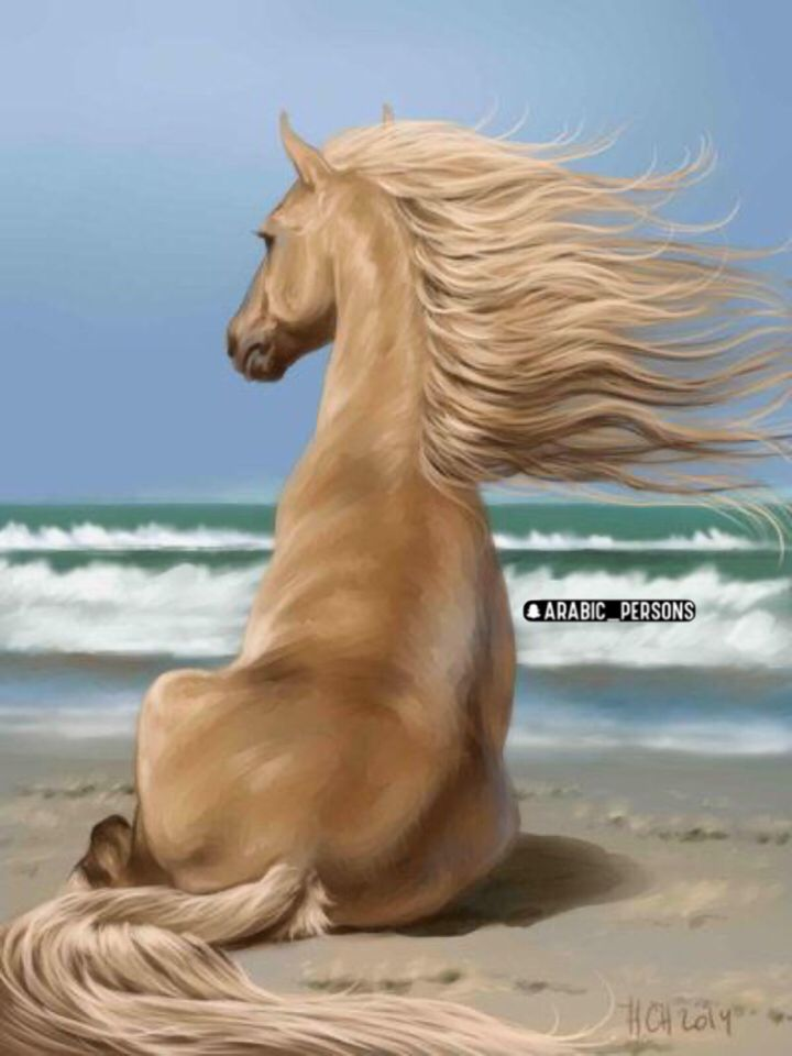 Pin By نجاة On تغذية بصريه In 2020 Funny Animals Horses Horse Breeds