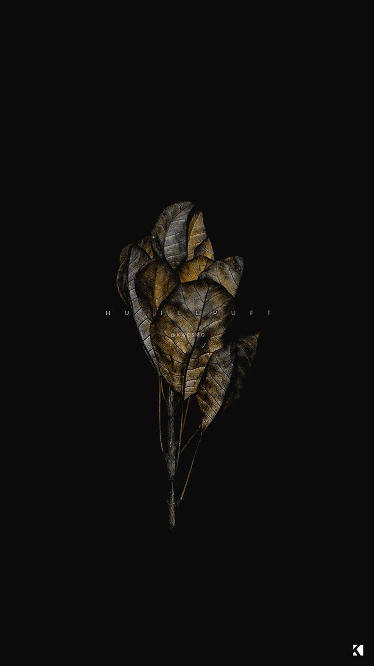 You can also upload and share your favorite flower aesthetic dark wallpapers. Pin on Novels + Written Work