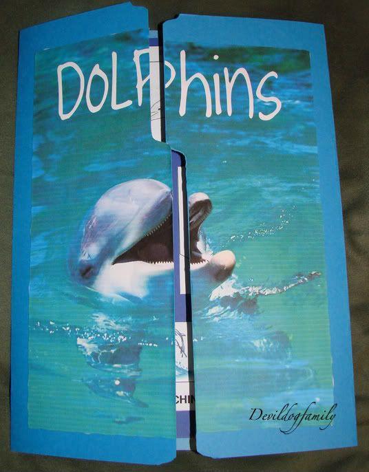 dolphin lapbook