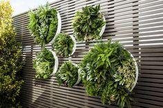 VERTICAL GARDENS | Greenery Designs