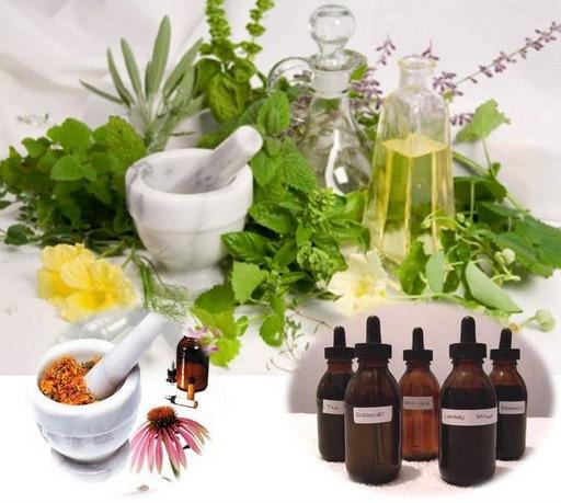 Los beneficios de las plantas medicinales