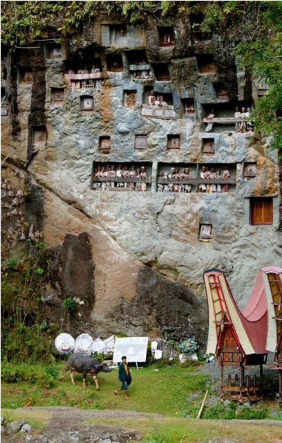 Toraja's Elaborate Funeral Ceremonies - click though to the article to find out about the customs involved.