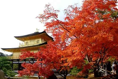 Japan, go there!