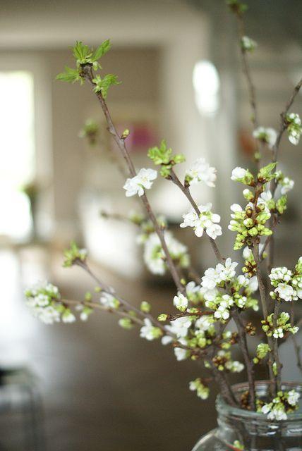 Mooie witte prunustakken