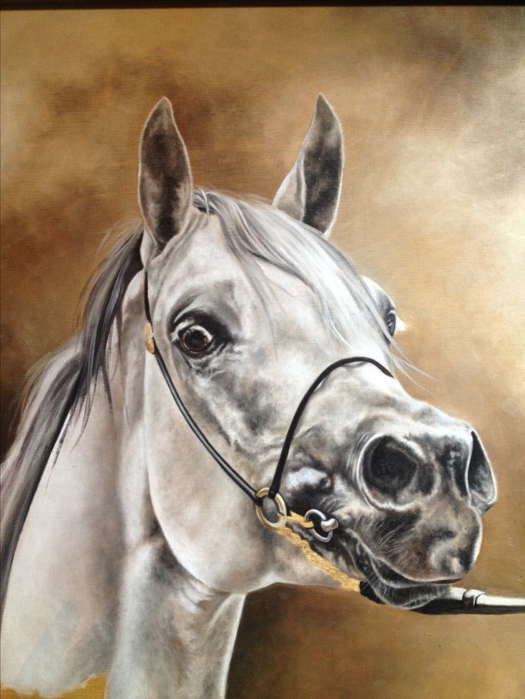 Horse oil painting by Katarzyna Staefanowicz