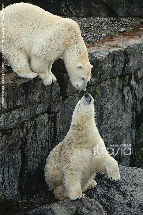the polar bear son pdf