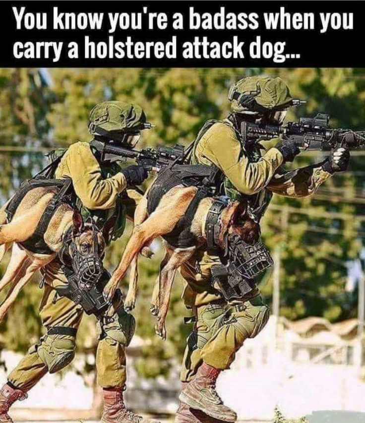Holstered Attack Dogs in the Armed Services