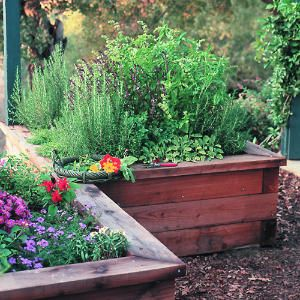 He designed five raised planter boxes and arranged them corner-to-corner in an inverted V formation.    The 4-foot-square boxes, made of redwood 4-by-6s capped with 2-by-6s, stand 20 inches tall. To hold the tiered box together, attach 18-inch 2-by-2s with wood screws to each interior corner and the middle of each side. Use landscape fabric to cover the ground beneath the box.