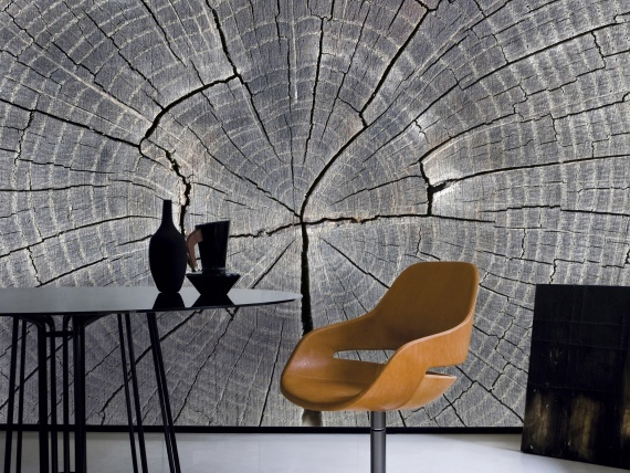 tree trunk growth rings - haven't ever seen anything like this for a wall treatment.