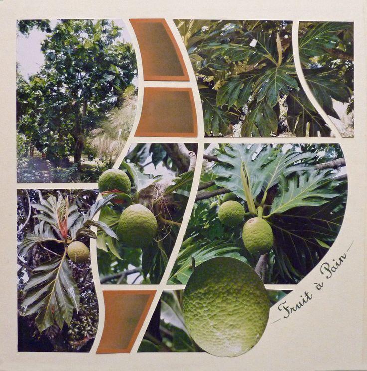 L'arbre et le fruit à pain en Guadeloupe. Gabarit Londres-Rio Azza