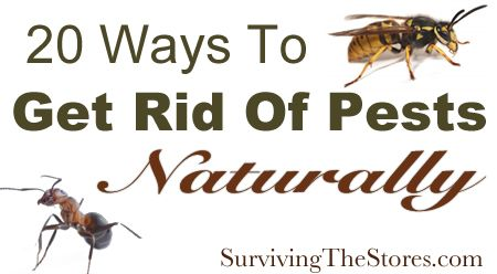 Get rid of pests without harsh chemicals - spiders, ants, mosquitos, fruit flies, and more!!