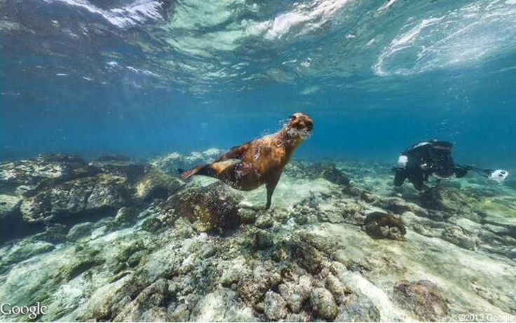 Google Maps just expanded its Street View to include the exotic Galapagos Islands. Check it out...wonderful photos. Thanks Google!!