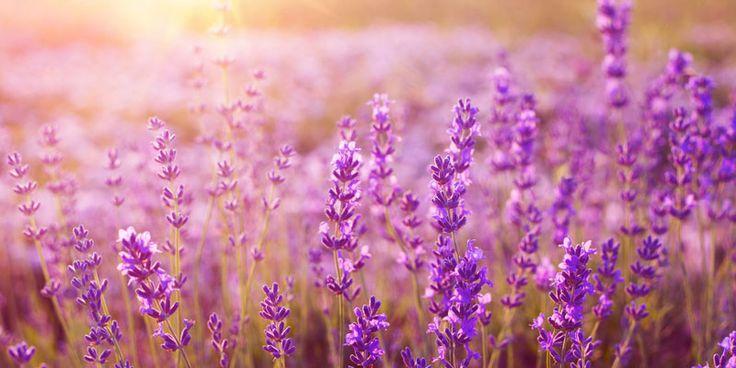 In den unscheinbaren Pflanzen am Wegesrand steckt ein enormes Heilpotenzial. Mit welchen Heilpflanzen Sie Ihre Seele stärken können, erfahren Sie hier.