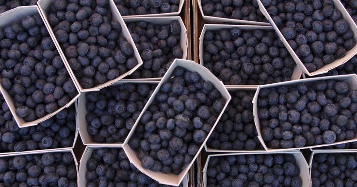 El mejor momento para plantar arbustos de arándanos. Los arándanos son una fruta nativa de Norte América. Son una fresa deliciosa y saludable que produce su fruto desde julio a septiembre, dependiendo de la variedad de arándano y de dónde crezca. Se crecen comercialmente en muchos estados, desde Oregon a Florida y Michigan. Las granjas de arándanos más grandes están en Michigan y Nueva Jersey. Se ...
