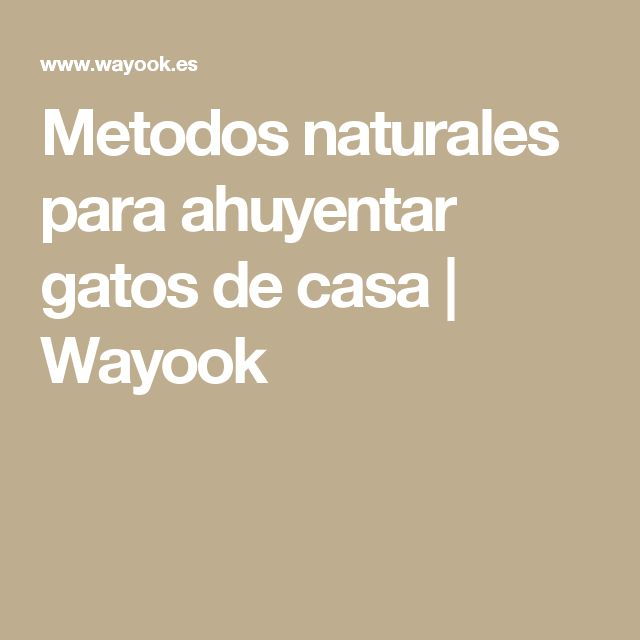 Metodos naturales para ahuyentar gatos de casa | Wayook
