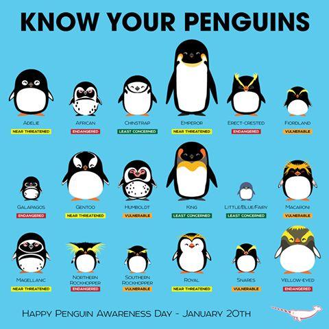 Zdjęcie użytkownika Antarctic Ocean Alliance.