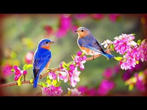 ❀ Morning Birds + Soft Rain © - YouTube