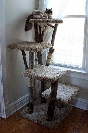 i want a cat tree, but not an overpriced crap tree from the stores...    i saw these cat trees on the road while driving through Harvard, looked them up online and now I WANT ONE!