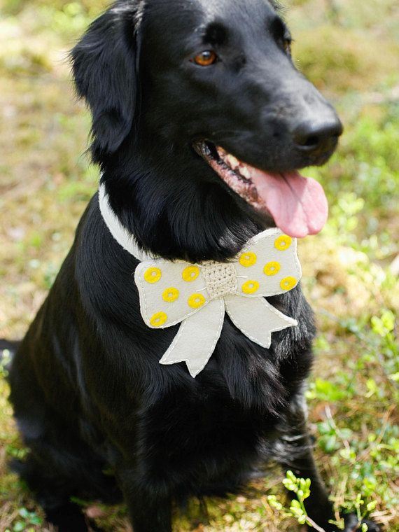 Dog Bow by Vicia Faba Design on Etsy