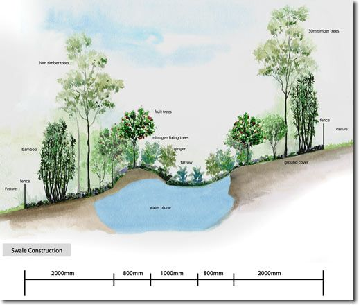 How a swale works. A swale is a ditch that has been dug along the contours of a slope in order to catch and store rainwater and preserve the soils from being washed away. The swale slowly releases the water to the plants around it, with the potential to re-green deserts and dry arid regions.