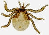 List of diseases spread by deer tick grows, including malaria-like problems and potentially fatal encephalitis
