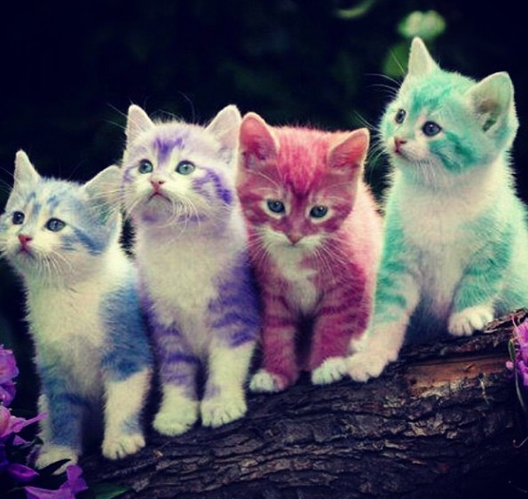 17 Best Images About Rainbow Kittens On Pinterest