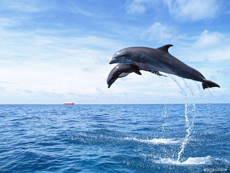 Море - любовь моя