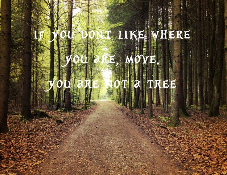 if you dont like where you are, move. you are not a tree