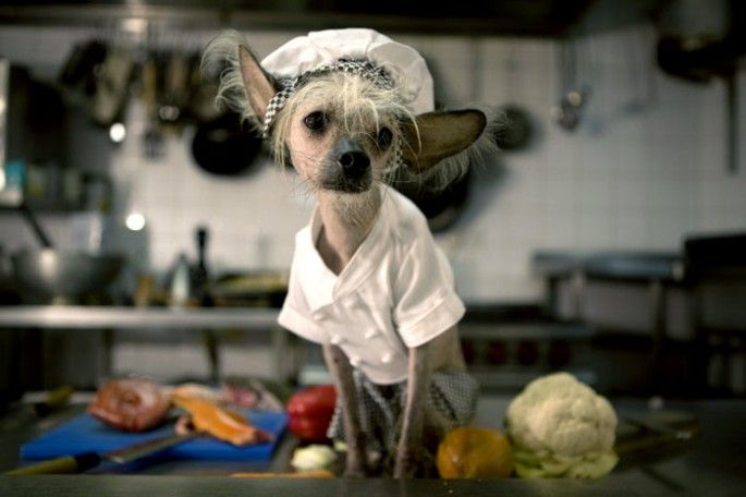 93 Best Chinese Crested Images On Pinterest Chinese