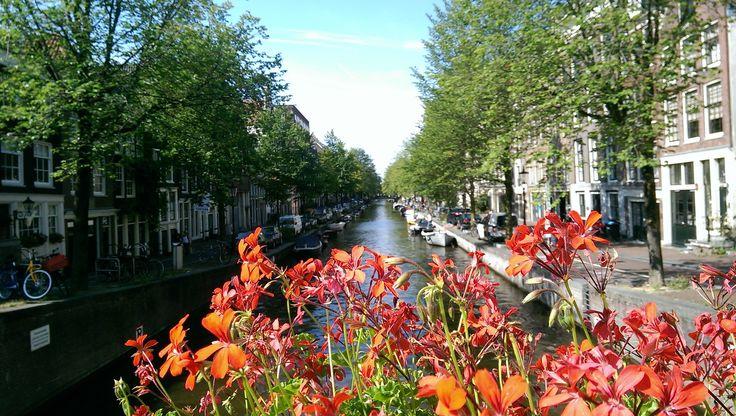 #amsterdam #europa #flowers #eurotrip