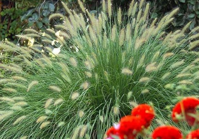 5 Ways To Landscape With Ornamental Grass #GardenDecor #LandscapeIdeas
