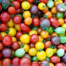 Snacks for the Dukan Diet Cruise Phase - 10 Sweet Snacks | thedukandietsite.com