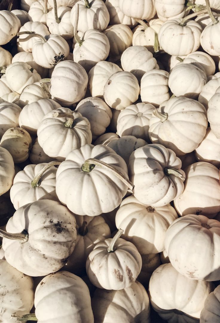Pumpkin Patch | ghost pumpkins