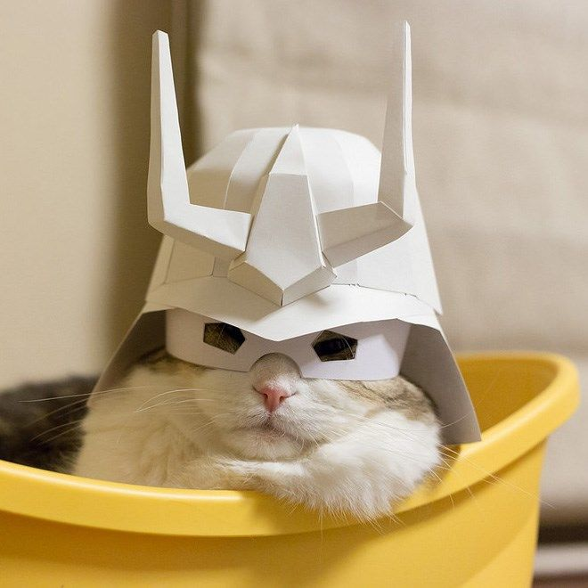 cute cat ready to battle