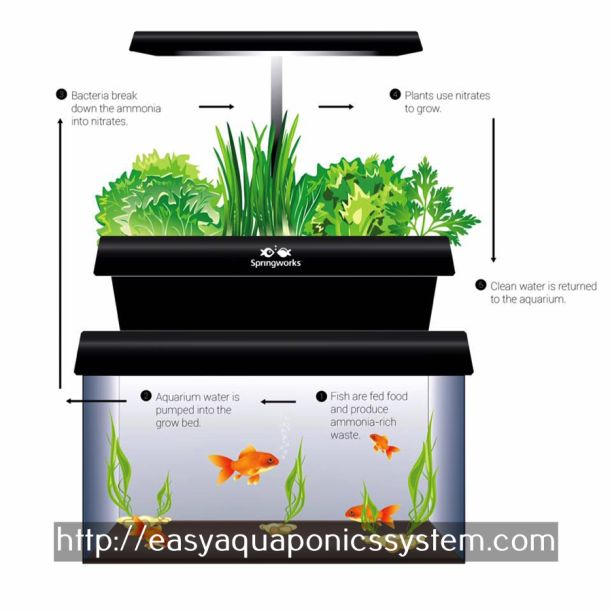 fish tank herb garden - aquaculture and hydroponics.aquaculture systems for sale 7433884099