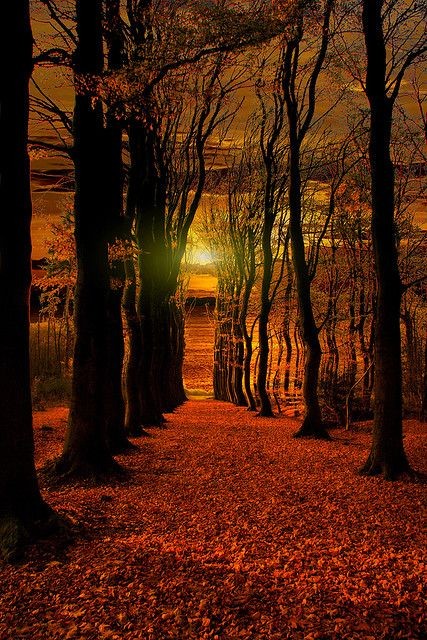 ✮ The Red Forrest: Forests, Nature, Autumn, Beautiful, The Netherlands, Sunrise Sunset, Trees, Photo