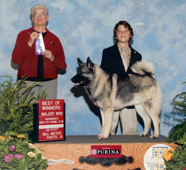 Pet Care Pros - AKC Dog Shows