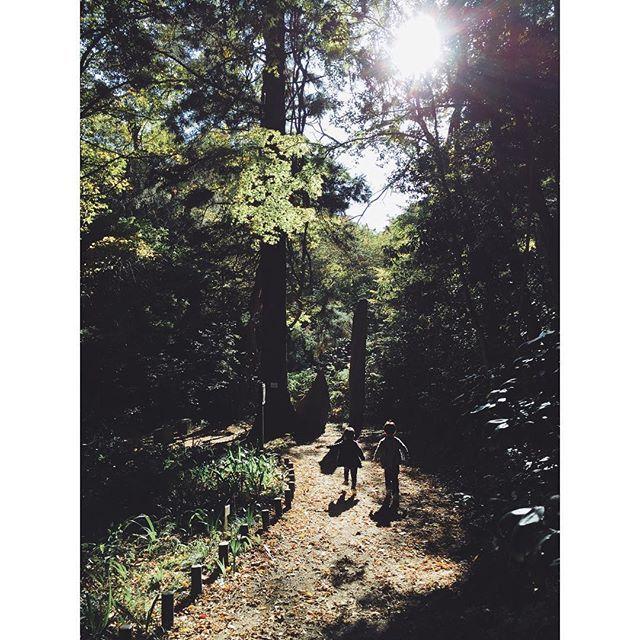 【pluto_oo】さんのInstagramをピンしています。 《- 祝日は嬉しいけれど夫は仕事 エネルギー有り余る小さい人たちを どうしようか… #すでに負けてる #日々#日常#何気ない日常#祝日 #散歩#森林#森#自然#遊歩道 #太陽#光#days#daily#dailyphoto #nature#sunshine#kids#holiday》