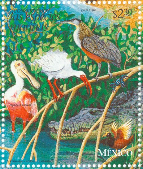 Bare-throated Tiger Heron stamps - mainly images - gallery format