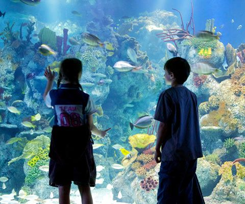 Have a whale of a time Bristol Aquarium where you'll come face to face with sharks, stingrays and a whole host of other weird and wonderful sea dwellers.   Nearest station: Bristol Temple Meads   http://www.bristolaquarium.co.uk/   #bristolaquarium #bristol #aquarium