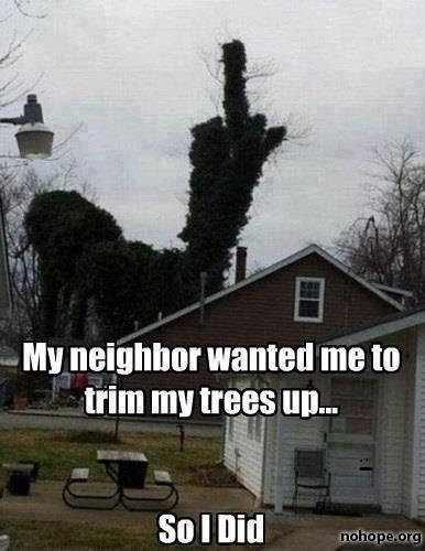 My neighbor wanted me to trim my trees up... So I did