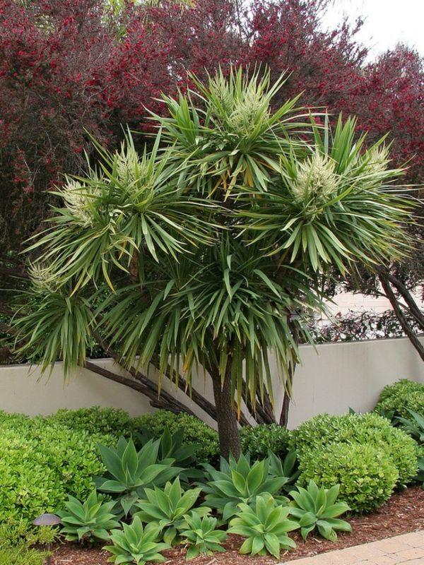 Yucca, mediterrane Bepflanzung