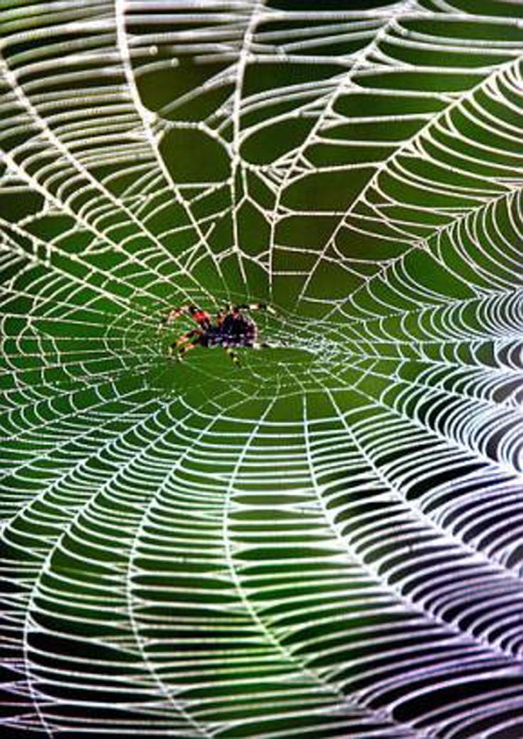 fern tree spider web