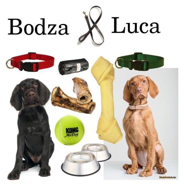 """Doggos"" by koczuba-anna on Polyvore featuring Pointer, collar, bones, dogs and tennisball"