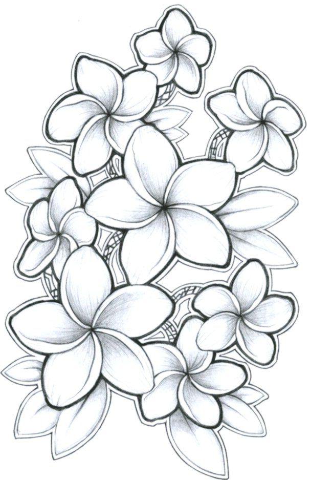 Plumeria Flower Images | Free Vectors, Stock Photos & PSD