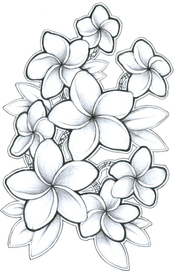 Black And Grey Plumeria Drawing In 2020 Tattoo Drawings