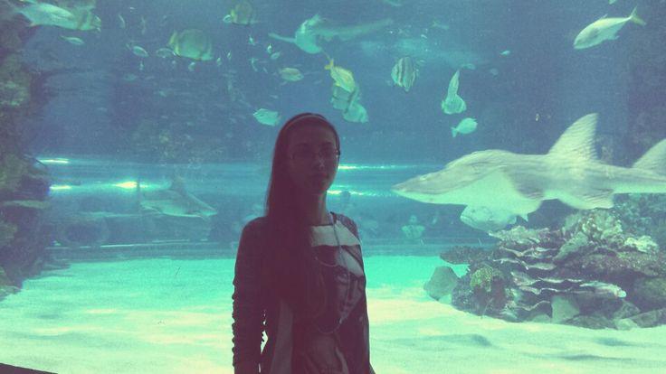 Shark^~^