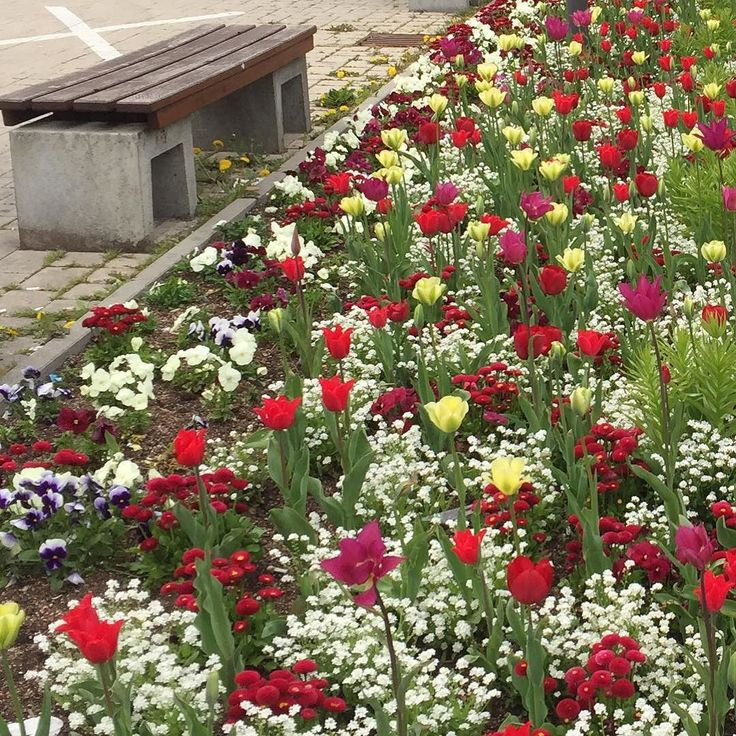 Weather's not that great today so here are some flowers to cheer everyone up!  #flowers #smiles #happinesd #spring #tulips #red #yellow #white #green #Stuttgart #0711 #Stuggi #bench #busstop