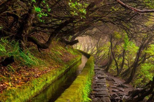 Levada auf Madeira